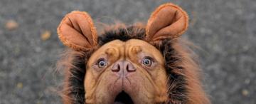 Halloween para mascotas: consejos para celebrar sin ponerlas en riesgo