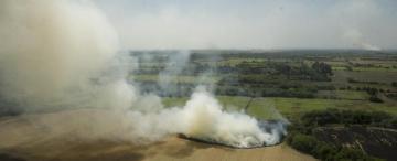 Reporte Rural: datos positivos para desterrar la quema de caña