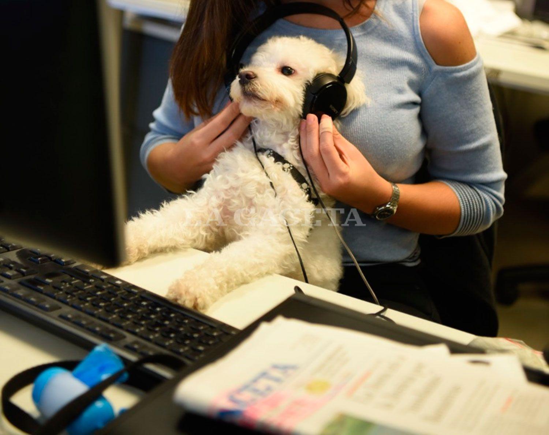 Spotify lanzó listas de reproducción para mascotas