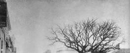 La copa de los árboles