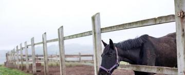 La idéntica proporción entre un pollo y un caballo