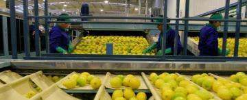 Las citrícolas acelerarán las exportaciones