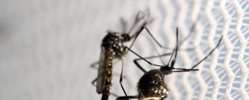 """No es casualidad que Aedes signifique """"odioso"""""""