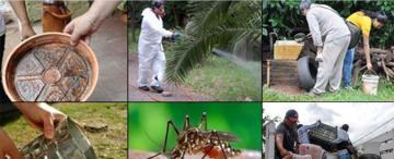 Dengue: cuáles son los lugares más impensados en que se puede criar el Aedes aegypti