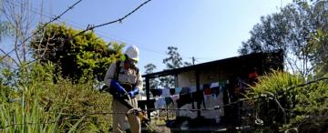 Dengue: la mejor prevención es matar las larvas, dice un experto