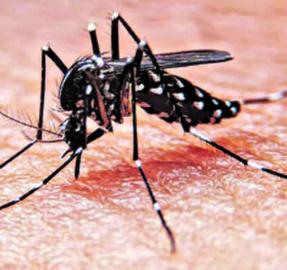 Matemáticas y dengue: los números pueden ayudar a controlar una epidemia