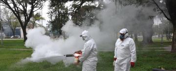 Dengue: cómo evitar que el Aedes aegypti se reproduzca