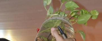 Si almacenás agua, que no sea un criadero de Aedes aegypti