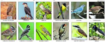 ¿Querés votar qué ave representará a Tucumán?
