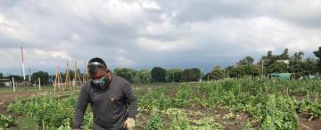 Crean 12 huertas urbanas por la crisis alimentaria
