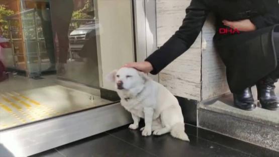 Boncuk, la perra que esperó durante una semana a su dueño en las puertas de un hospital