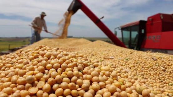 La soja tuvo la cotización más alta de los últimos siete años