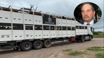 Encontraron otras 150 vacas robadas en el campo del senador José Alperovich