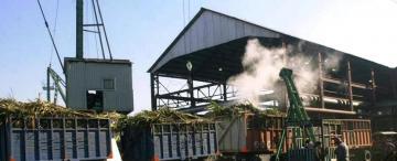 La Florida arrancará la zafra azucarera el 28 de este mes