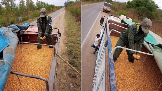Decomisaron en Salta 180 toneladas de soja y maíz transportados ilegalmente